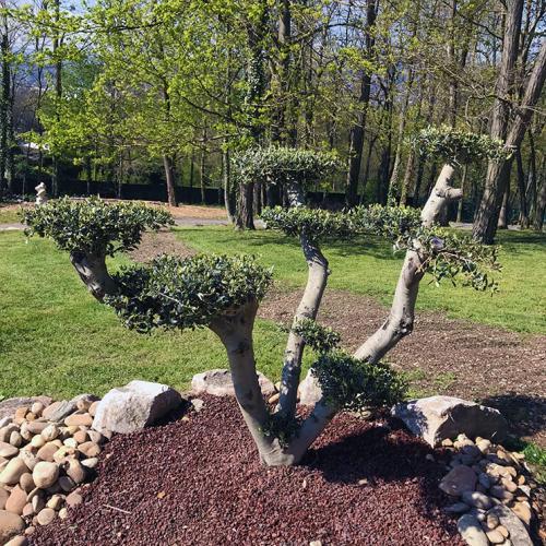 Entretien & rénovation de vos espaces verts